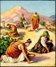 sabbath restoration - gathering manna