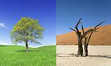 deux images d'arbres accolées, un vert feuillu dans une prairie verdoyante sous un beau ciel bleu, et un autre sec et mort, noir, dans un endroit désertique.
