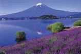paysage – champ de fleurs de lavande, lac, et montagne au sommet enneigé se reflétant dans le lac
