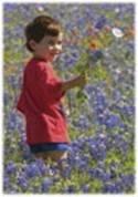 enfant cueillant des fleurs, au milieu d'un champs de fleurs